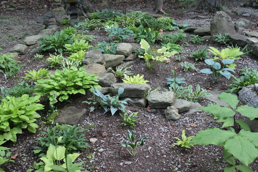 Smug Creek Gardens The Small Hosta Garden